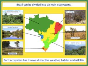 Exploring Brazil's ecosystems - presentation 2