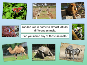 Introduction to London Zoo - activity - cover image 4