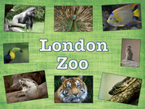 London Zoo - KS1/KS2 Geography unit